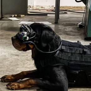 L'armée américaine projette d'équiper ses chiens de lunettes de réalitéaugmentée